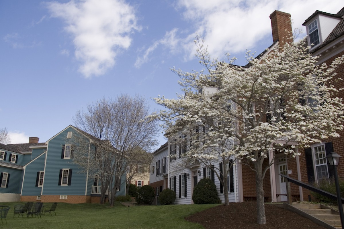 A cherry tree covered in white blooms stands beside small colonial-style houses of white and blue