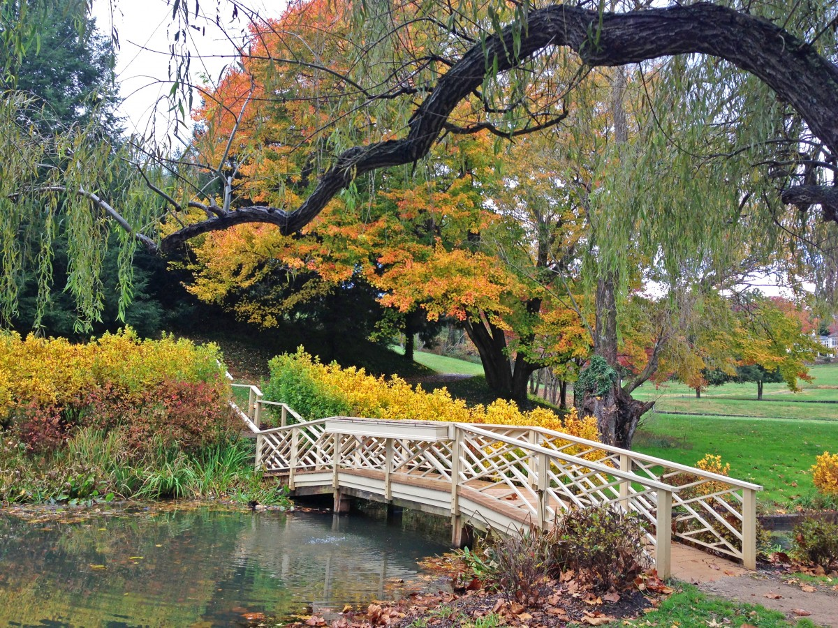 Bridge over a pond in the fall